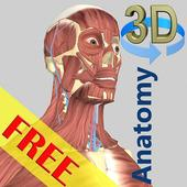 3D Bones and Organs (Anatomy) icon