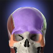 Anatomyka - 3D Human Anatomy Atlas icon