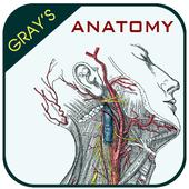 Gray's Anatomy - Anatomy Atlas 2020 icon