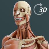 Visual Anatomy 3D | Human icon