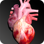 Circulatory System in 3D (Anatomy) icon