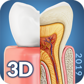 Dental  Anatomy icon