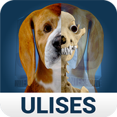 Osteology in Dogs (Free) icon