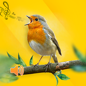 New Birds Ringtones 2020 - Bird sound mp3 icon