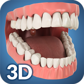 Dental Anatomy Pro. icon