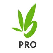 Bamboo Pro icon