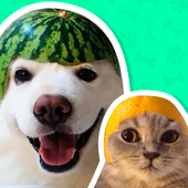Best Animal Stickers for WhatsApp WAStickerApps icon