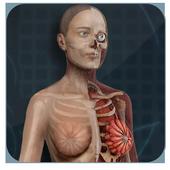 Female Anatomy 3D : Female 3D organs Anatomy icon