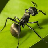 Planet Ant icon