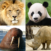 Animals Quiz - Learn All Mammals and Dinosaurs! icon